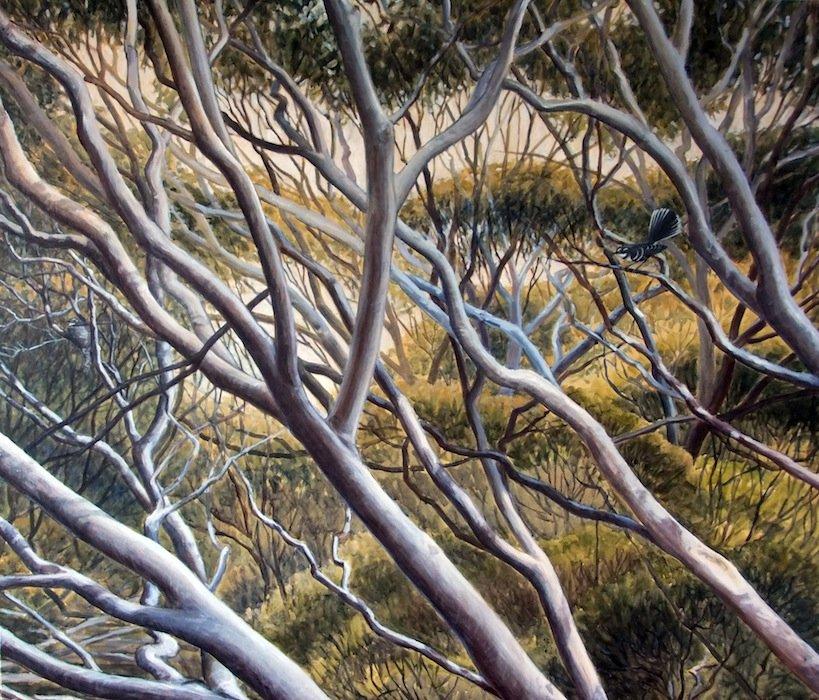 Susan Tingay   Fantail Mallee Fine Art