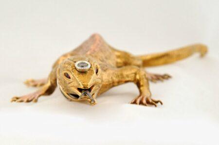 Lw Lizard Face