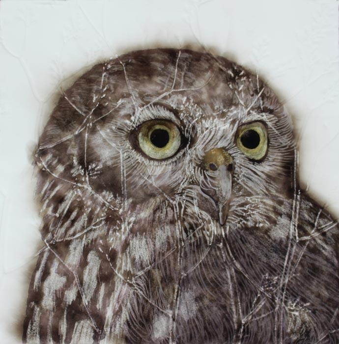 Kay Gibson Barking Owl 40X40Cm