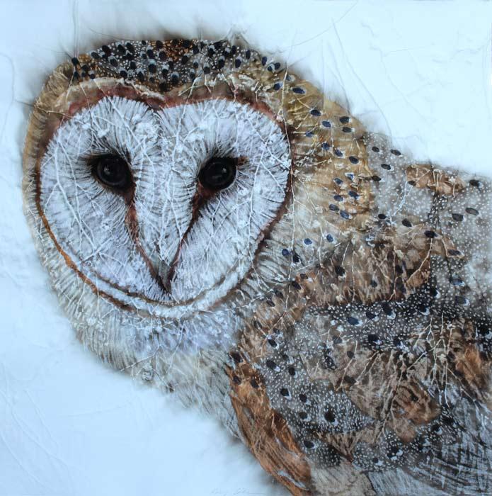 Kay Gibson Masked Owl Beauty 60X60Cm