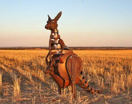 Jordan Sprigg Kangaroo In The Field
