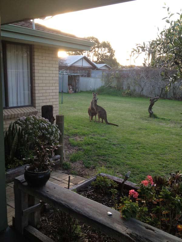Daniel Fisher Sculpture Studio Shot With Kangaroos