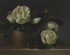Philip Drummond   Magnolias Fine Art