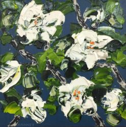 Felicia Aroney   White Magnolias on Indigo Fine Art