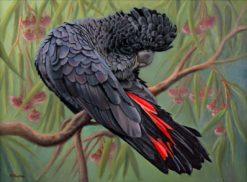 Nicky Shelton   Lenny Red Tail Fine Art