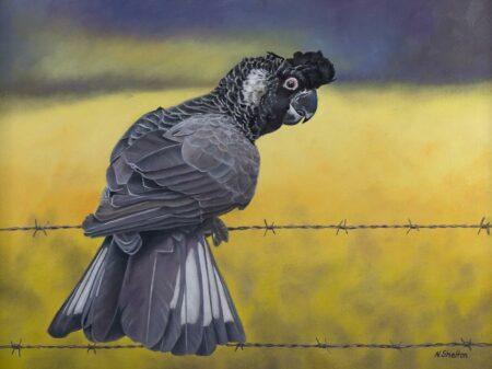 Nicky Shelton Marty Cockatoo Painting