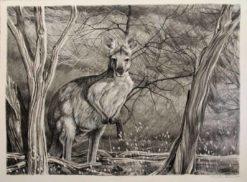 Christine Lawrence   Euro Kangaroo Fine Art