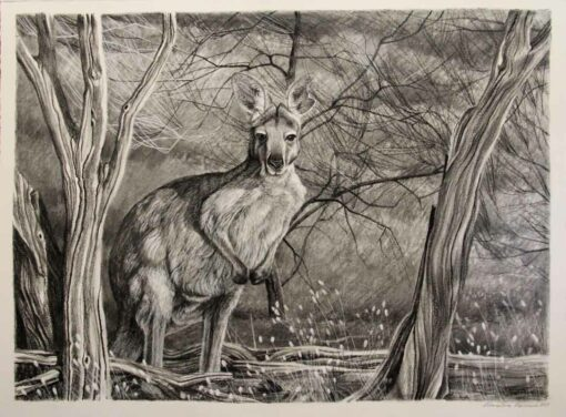 Christine Lawrence Euro Kangaroo Drawing