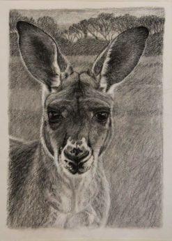 Christine Lawrence   Sophia Kangaroo Fine Art
