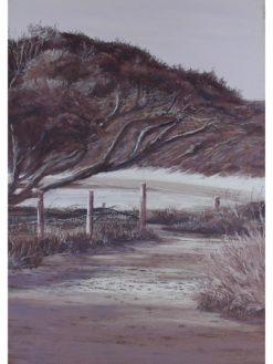 Ann Steer   Yallingup Track Fine Art