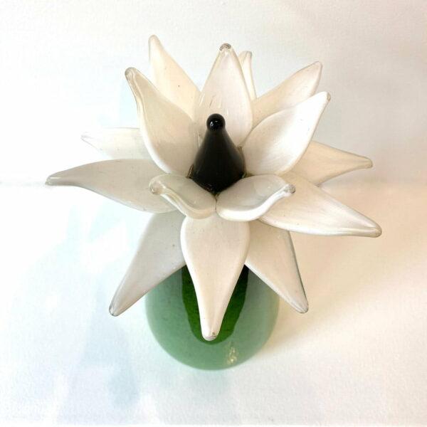 Eileen Gordon Water Lilly White Flower