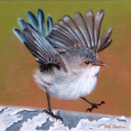 Nicky Shelton – Happy Feet, Splendid Fairy Wren
