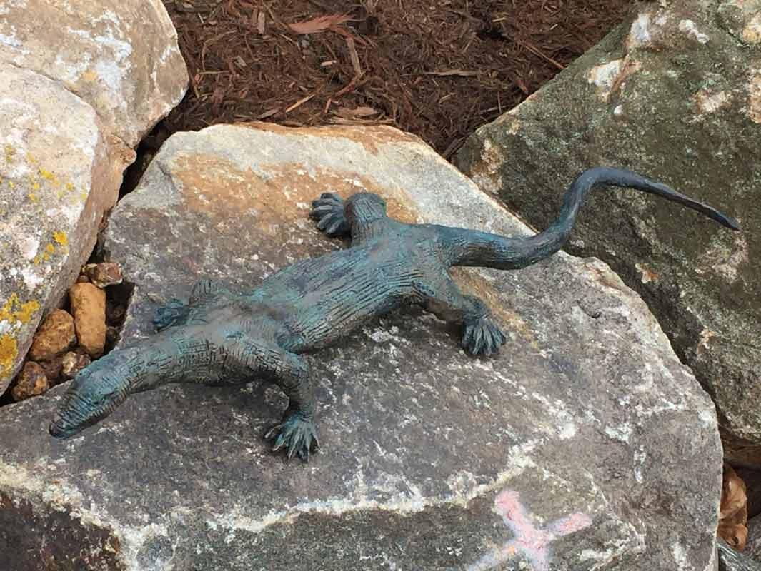 Brian Borshoff Up Close And Personal Lizard