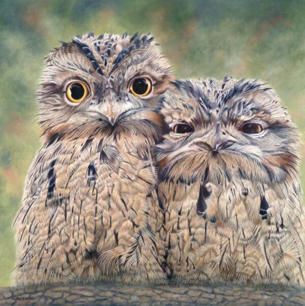Nicky Shelton Sparky Gus Baby Tawny Frogmouth Painting